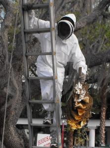 Live bee removal in Tampa