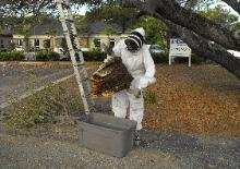Live bee removal in Treasure Island