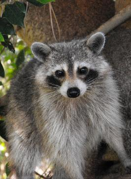 Pinellas County Animal Control Bee Removal Rodent