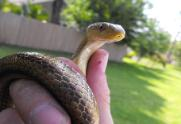 Snake removal in Crystal Beach