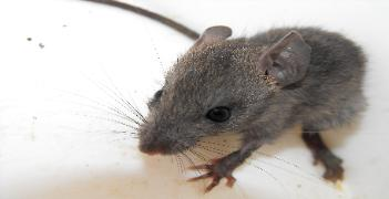Mouse removal in Valrico