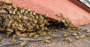 Bee removal in Temple Terrace